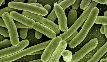 بیکٹیریا بھی آپس میں باتیں کرتے ہیں: نئی تحقیق 3